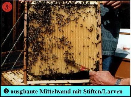 voraussezungen für besamung für bienen
